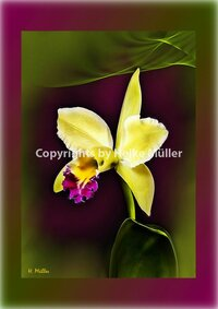 Inspirations Orchid